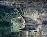 PA-1046-Norvège-Svalbard, Baie du Roi, iceberg