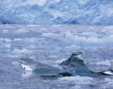 PA-1076-Norvège-Svalbard, Glacier Monaco, iceberg